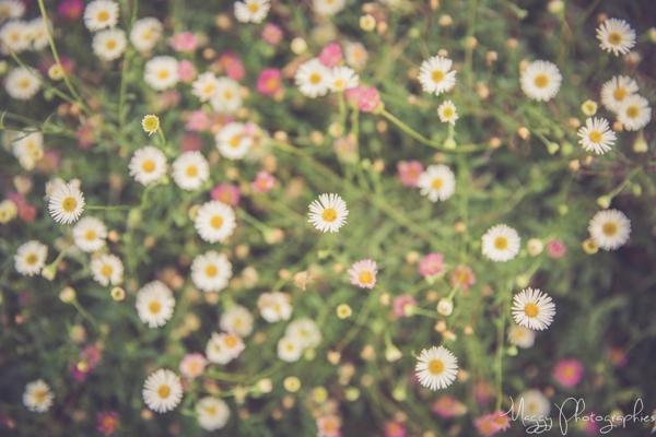 photo-couple-tous-les-deux-mains-fleurs-maggy-photographies